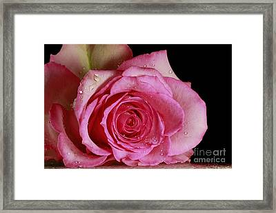 Love Forever  Framed Print by Inspired Nature Photography Fine Art Photography