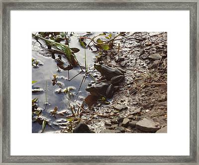 Framed Print featuring the photograph Love Frogs by Michael Porchik