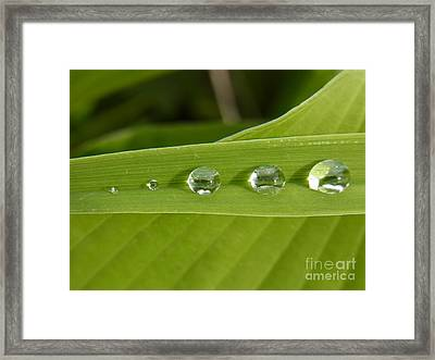 Framed Print featuring the photograph Love Gathering by Agnieszka Ledwon