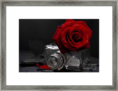 Love Hurts Framed Print by Peter Nix