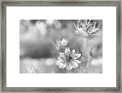 Love In A Mist Framed Print by Caitlyn  Grasso