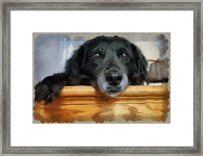 Love In A Puppy's Eyes Framed Print by Paulette B Wright