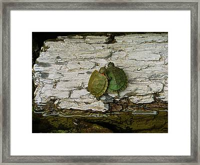Love In A Shell Framed Print