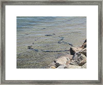 Love In The Water Framed Print by Marci Spotts