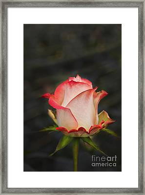 Love Is A Rose II Framed Print by Al Bourassa