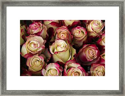 Love Is A Rose IIi Framed Print by Al Bourassa