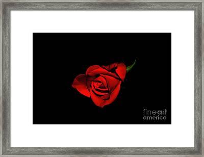Love Is A Rose V Framed Print