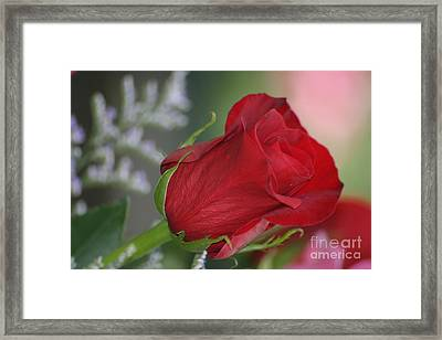 Love Is Forever Framed Print