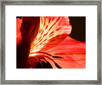 Love Is In Bloom Framed Print by Tara Miller