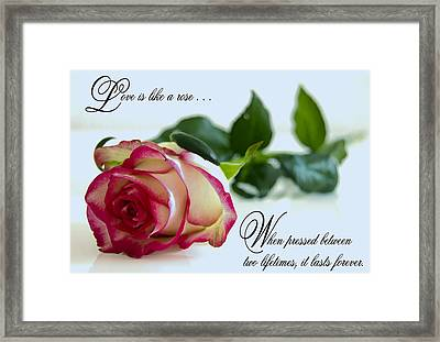 Love Is Like A Rose . . . Framed Print