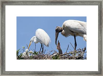 Love Is Sharing Your Space Framed Print by Mary Lou Chmura