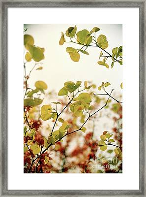 Framed Print featuring the photograph Love Leaf by Rebecca Harman