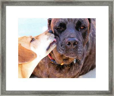 Framed Print featuring the photograph Love Licks by Janice Rae Pariza