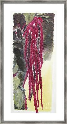 Love Lies Bleeding Framed Print
