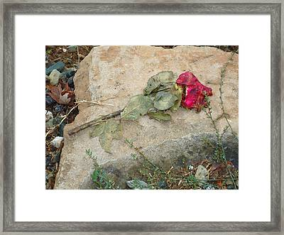 Framed Print featuring the photograph Love Lost by Steven Holder