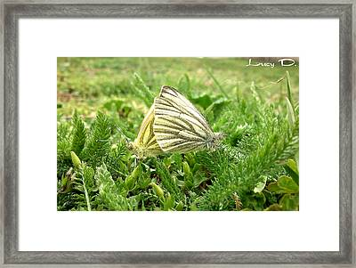 Love Framed Print by Lucy D