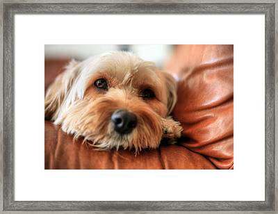 Love Me Like My Dog Does Framed Print