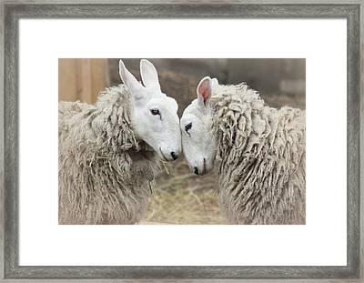 Love Me Sweet Framed Print by The Art Of Marilyn Ridoutt-Greene