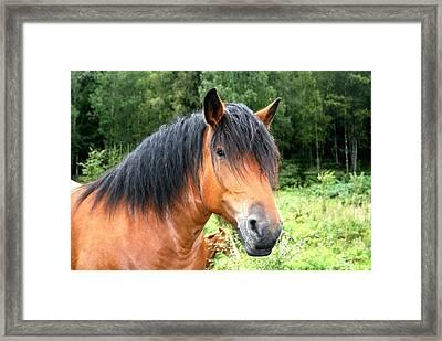 Love Of Horses Framed Print
