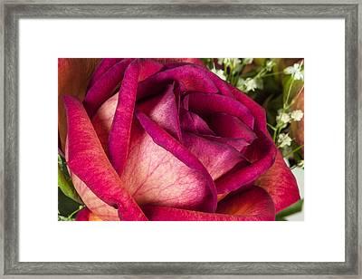 Love Of Mine Framed Print by Jon Glaser