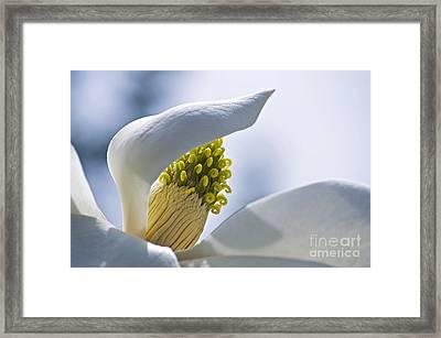 Love Of Nature Framed Print by Gwyn Newcombe