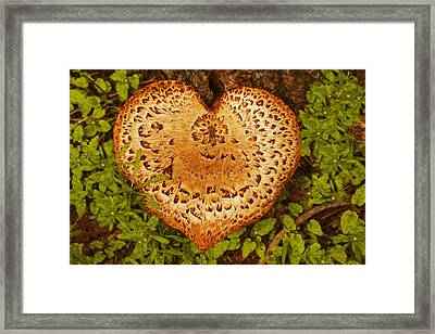 Love Of Nature Framed Print by Jack Zulli