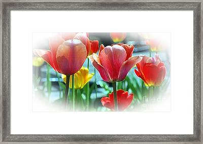 Love Of Tulips Framed Print