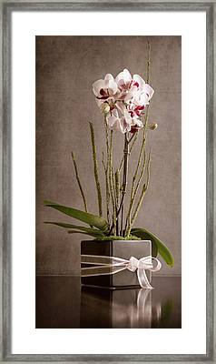 Love Orchid Framed Print