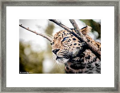 Framed Print featuring the photograph Love Panther Iv by Stwayne Keubrick