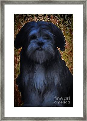 Love Puppies Framed Print by Katherine Williams