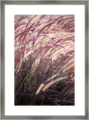 Love Purple Fountain Grass Framed Print