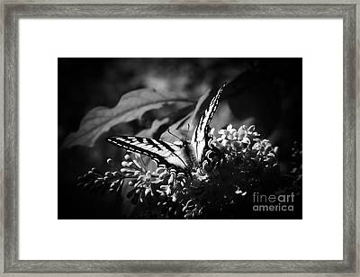 Eclectus Parrot  - Eclectus Roratus Framed Print by Sharon Mau