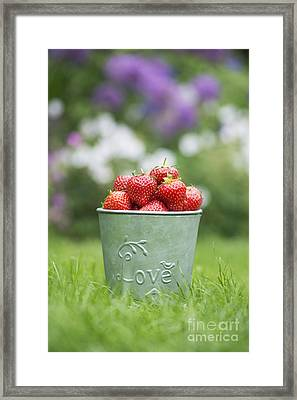 Love Strawberries Framed Print by Tim Gainey