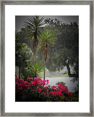 Love The Rain  Framed Print