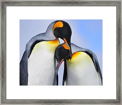 Love Framed Print by Tony Beck