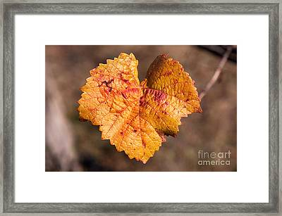 Framed Print featuring the photograph Love by Yew Kwang
