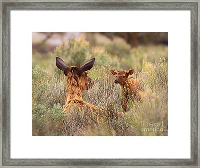 Framed Print featuring the photograph Love You Mama by Clare VanderVeen