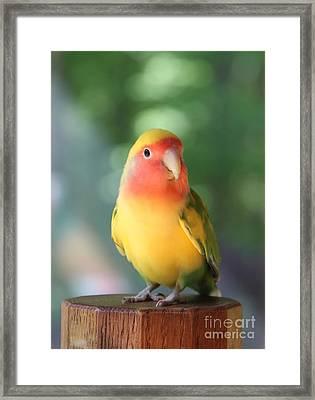 Lovebird On A Pedestal Framed Print