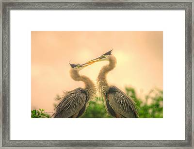 Framed Print featuring the photograph Lovebirds  by Dennis Baswell