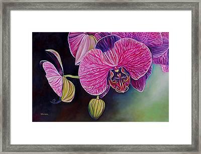 Lovebirds Framed Print by Eve  Wheeler