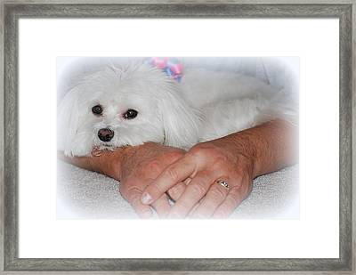 Loved Framed Print by Mary Beth Landis