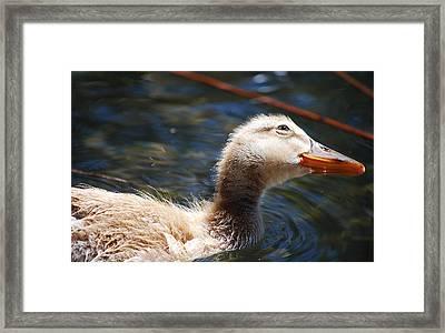 #loveduck Framed Print