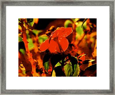Lovely A Flower Framed Print by Gayle Price Thomas