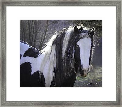 Lovely Boy Framed Print by Terry Kirkland Cook