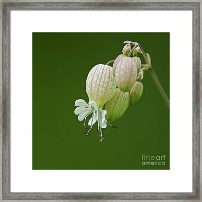 Lovely Bubbles... Framed Print by Nina Stavlund