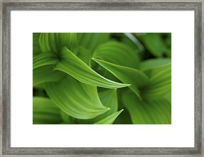 Lovely Corn Lily Glacier National Park Framed Print by Rich Franco