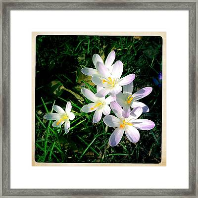 Lovely Flowers In Spring Framed Print