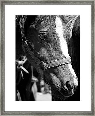 Lovely Foal Framed Print by David Resnikoff
