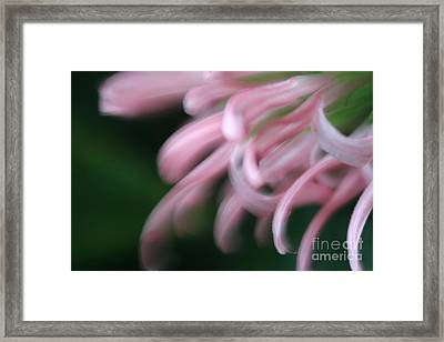 Lovely In Pink Framed Print by Mary Lou Chmura