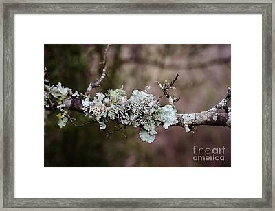 Lovely Lichen Framed Print